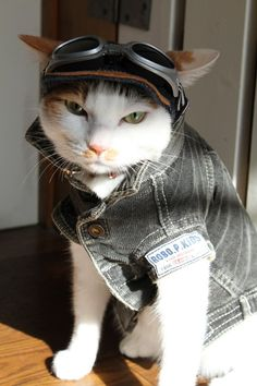 Hardcore Kitty is ready to ride his bike.