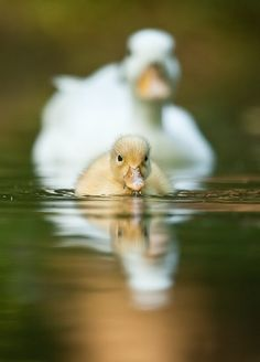 swimming lessons with mama