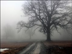 Halloween 100 yr old trees with fog landscape by SpookyHollow, $13.50
