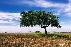 #árbol #tree #naturaleza #inspiration #inspiración #vscocam #vscoespana