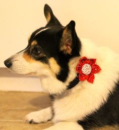 Christmas dog collar flowers offered in a variety of colors and styles by PuppyPawzBoutique on Etsy