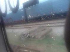 Trenes 12