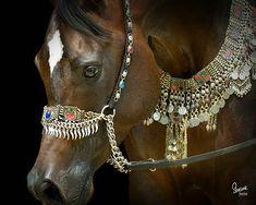 Botswana, Arabian Stallion in signature design from Arabian Fancy. Talaria Farms. Suzanne Sturgill photo