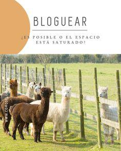 Hay quienes creen que el espacio para bloggear está saturado ¿Realmente tienen razón? Las cifras dicen lo contrario