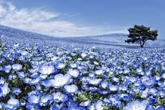 """Lạc vào thiên đường hoa """"Mắt Xanh"""" tuyệt đẹp - Đại Kỷ Nguyên tiếng Việt"""