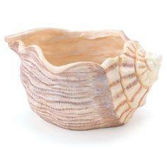 Beautiful Seashell Planter/Vase Great Beach Decor Burton ... http://www.amazon.com/dp/B00I888V8Y/ref=cm_sw_r_pi_dp_30npxb03ZEZVM