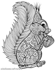 Hand drawn funny squirrel with nut for adult anti stress Coloring Page with high details isolated on white background, illustration in zentangle style. Colouring Pics, Doodle Coloring, Coloring Books, Mandala Coloring, Free Adult Coloring Pages, Animal Coloring Pages, Mandalas Drawing, Mandala Art, Zentangles
