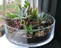 Jaded Greenes Terrarium Succulent Terrarium by theZenSucculent