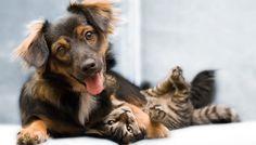 Chiens et chats sous le même toit? Pas de problème! Découvrez nos conseils.