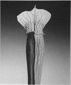mapplethorpe flowers - Google Search
