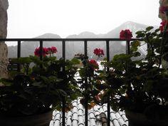 Gennaio 2015. Grazie al microclima del Lago di Garda, i gerani rossi fioriscono anche con qualche spruzzata di neve.