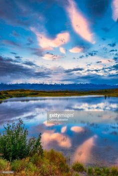 Denali National Park and Preserve, Alaska, United States - August, 2016.| #stockphotos #gettyimages #print #travel
