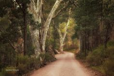 https://flic.kr/p/VmTdYL | Walking Trail | Wilpena Pound Flinders Ranges South Australia
