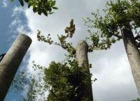 S.Gregorio Matese. Ambientalisti denunciano taglio 'sconsiderato' di alberi