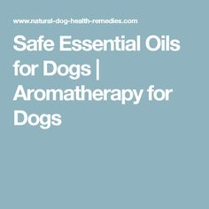 Safe Essential Oils for Dogs | Aromatherapy for Dogs