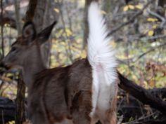 Goats, Ohio, Deer, Animals, Columbus Ohio, Animales, Animaux, Animal, Animais