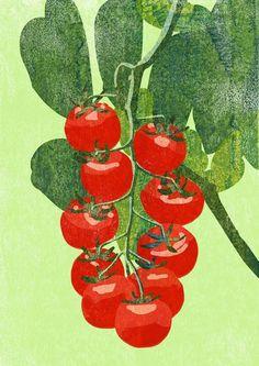 Tomatoes / Tatsuro Kiuchi