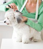 10 Secrets of Pet Groomers