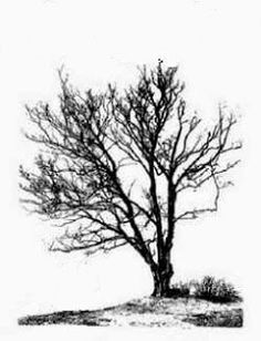 Realistic Drawings Learn to Draw: Learn The Secret Of How To Draw Trees You Draw, Learn To Draw, Drawing Lessons, Drawing Techniques, Realistic Drawings, Cool Drawings, Painting & Drawing, Drawing Trees, Painting Trees