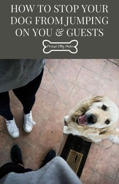 How To Stop Your Dog From Jumping On You & Guests  Check out our dog training tips at http://bestdogcratesandbeds.com! #MasterDogTrainingandSocializing