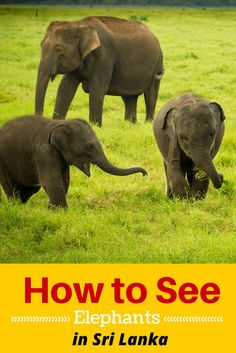 The best travel destinations to see elephants in the wild in Sri Lanka. It's time for the adventure of a lifetime!