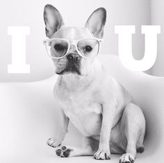 Baby Frenchies Are Best Friends & Cuddle-Buddies #refinery29  http://www.refinery29.com/dog-milk/1#slide3