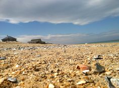 So many seashells, so little time... #OBX