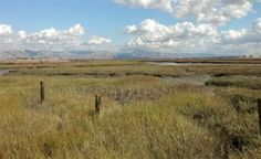 Lucy Evans Baylands Nature Interpretive Center After testing the wildlife observation platforms for some fantastic birdwatching, step into the center to learn more about the animals living in the surrounding tidal and freshwater habitats.