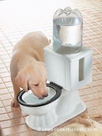 Refilling Dog Bowl -...