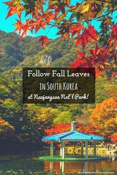 Follow Fall Leaves at Naejangsan National Park South Korea
