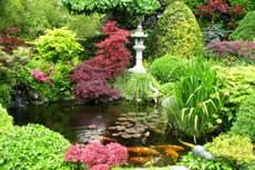 I just love the colors and peacefulness of Japanese gardens