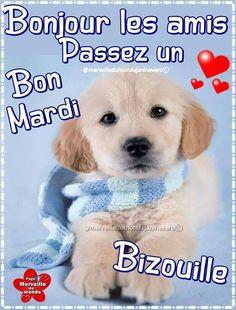 Bon Mardi, Labrador Retriever, Dogs, Animals, Facebook, Happy Tuesday, Morning Pics, Good Morning, Labrador Retrievers