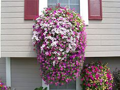 Make hanging baskets