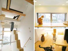 Quem tem um gatinho sabe que, geralmente, eles não ligam tanto para atividades fora de casa quanto os cachorros. No entanto, adoram se enfiar em todo tipo