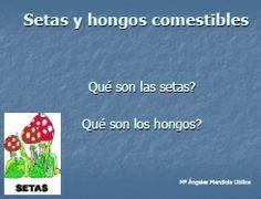 GUÍA DE SETAS Y HONGOS ecoagricultor.com