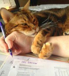 kittehkats: amazing-creature.blogspot.ca
