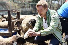 羊さんにミルクをあげてまーす