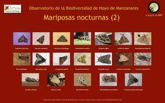 MARIPOSAS NOCTURNAS 2