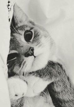 #Cute #Pet #Pictures