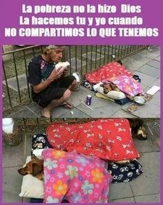 este tipo no es pobre es rico en el sentido que si importa Toda la información y productos especializados para el la raza perro maltés