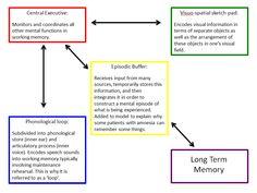 Baddeley's Working Memory Model Componants