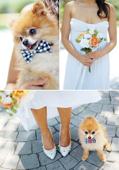 Chic Sprinkles: DIY: No-Sew Wedding Bow-Tie