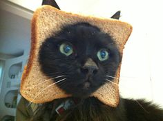Cat Breading (Latest Internet Trend)    Cat breading is the process of cutting a hole in a piece of bread, and then slipping it onto the face of your cat.    I dont understand