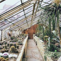 A Cactus Lovers Sanctuary