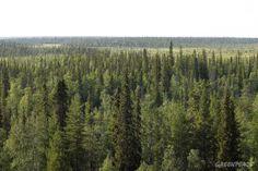 Sopimus säästää 35 000 hehtaaria arvokasta metsää Lapissa ...