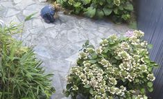 Loos van Vliet - Flower Garden, Haarlem Gardens, Van, Flowers, Outdoor Gardens, Vans, Royal Icing Flowers, Flower, Florals, Garden