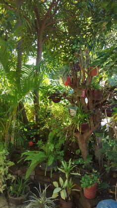 Jardín ecológico. Reutilizando materiales en tu hogar puedes lograr un pequeño lugar para relajarte