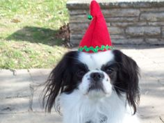 Christmas Dog Elf Hat Small Red by Doginafez on Etsy