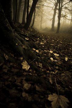 """""""Magas, rézszín fák között álltak. A holdfény halványan csillogott a leveleken, fonákjuk azonban sötét volt, akár az éjszaka. Egészen finom vöröses fémcsillogás futott végig a törzseken és az avaron. Fölismerte ezt a fényt: nagyon rég járt erre, egy világító szarvas nyomában, de megismerte volna akkor is, ha ötven, vagy akár száz évet kell várnia a viszontlátásig. """""""