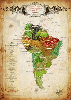 LINGUAGEM GEOGRÁFICA: AMÉRICA DO SUL, ÁFRICA E SUAS ERVAS